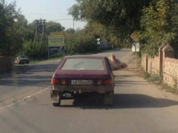 Фотоподборка Дня - 3305 (52 фото)