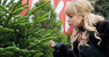 Как использовать осыпавшуюся хвою с елки после праздников - «Фото»