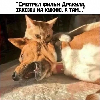 Прикольные картинки. Выпуск 3007
