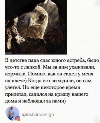 Истории о помощи животным (9 фото)