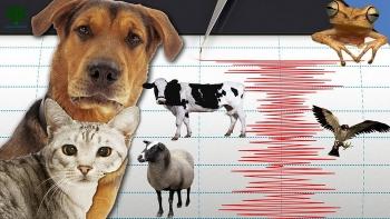 Могут ли животные предсказывать землетрясения?