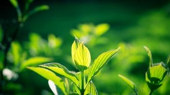 Почему листья растений зеленые?